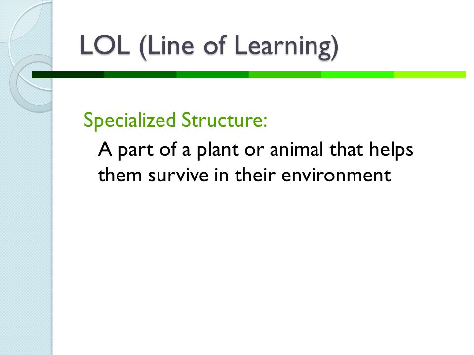 LOL (Line of Learning) Specialized Structure: A part of a plant or animal that helps them survive in their environment