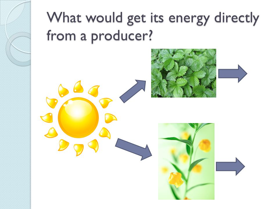 What would get its energy directly from a producer