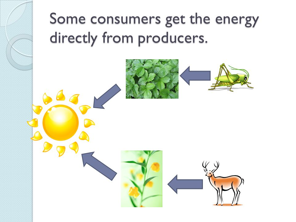 Some consumers get the energy directly from producers.