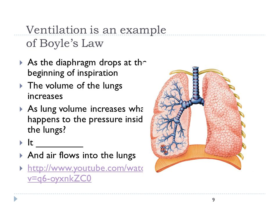 Ventilation is an example of Boyle's Law