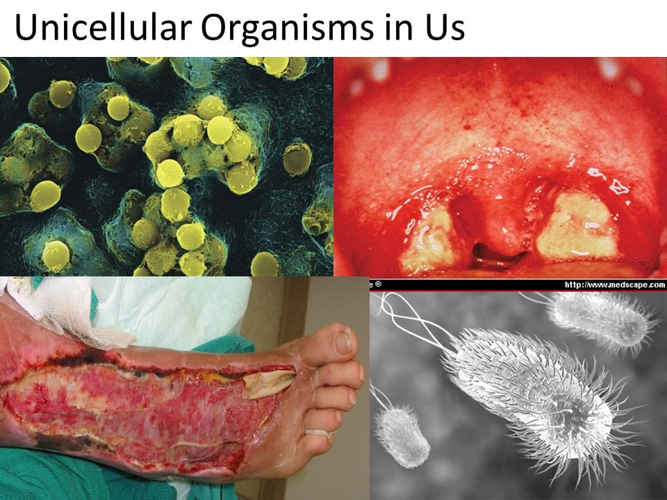 Unicellular Organisms in Us