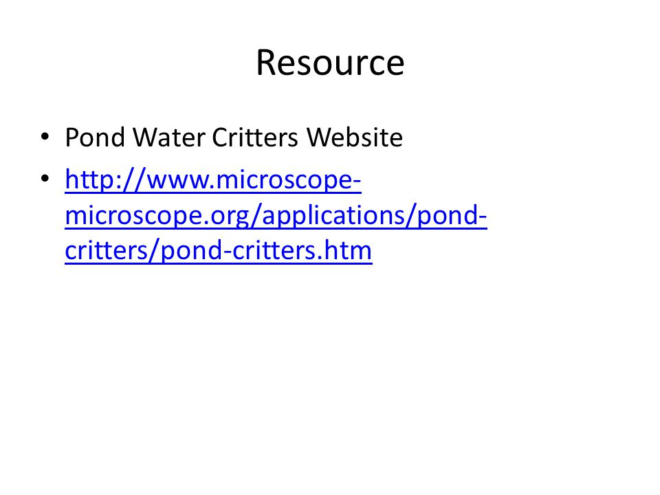 Resource Pond Water Critters Website