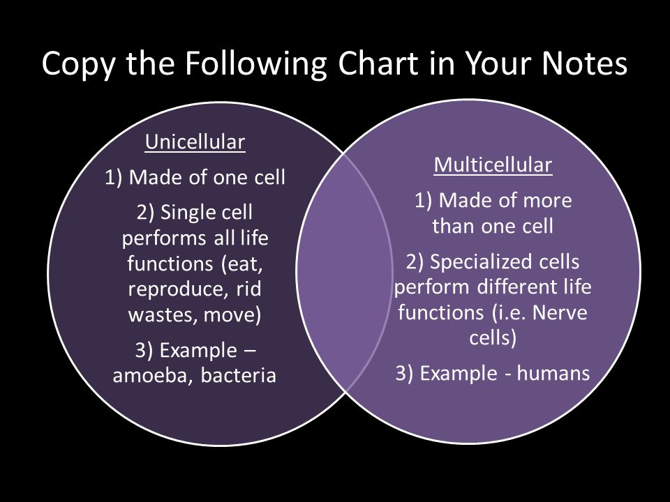 Copy the Following Chart in Your Notes