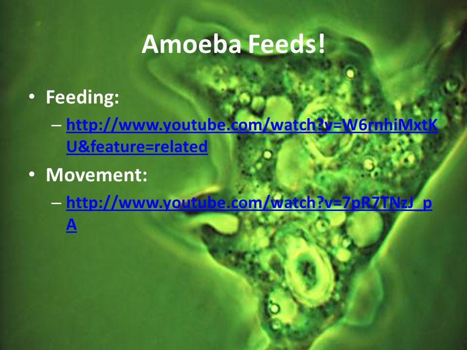 Amoeba Feeds! Feeding: Movement: