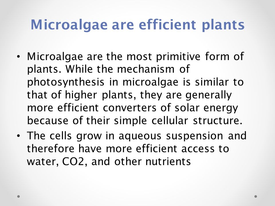 Microalgae are efficient plants