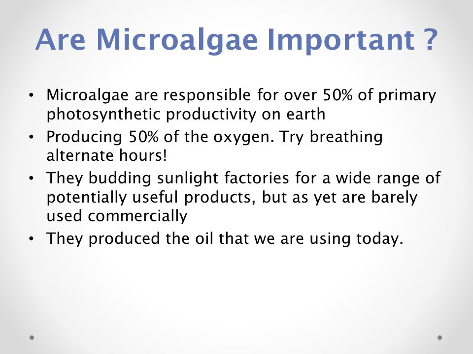 Are Microalgae Important