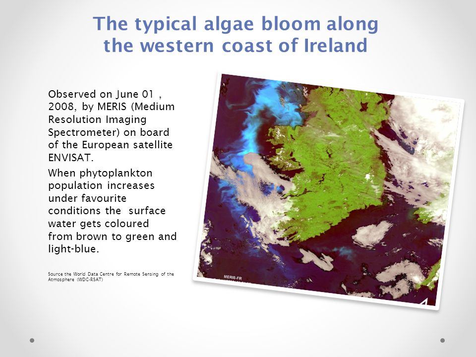 The typical algae bloom along the western coast of Ireland