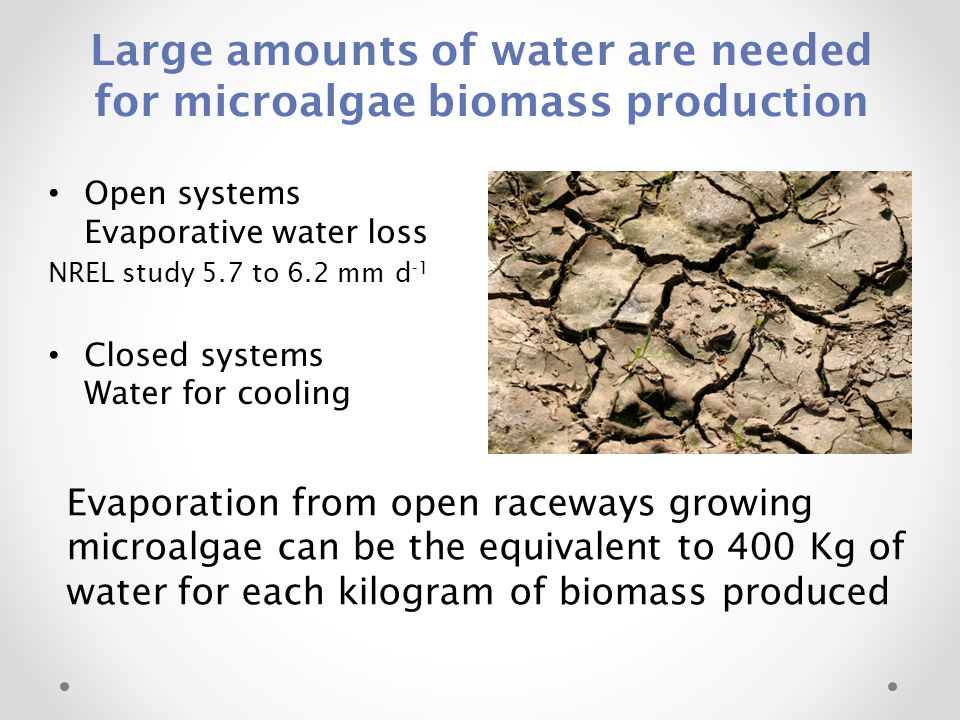 Large amounts of water are needed for microalgae biomass production