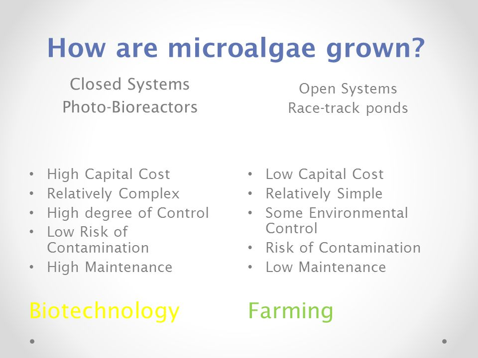How are microalgae grown