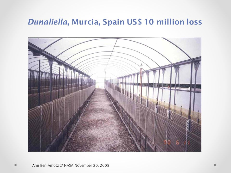 Dunaliella, Murcia, Spain US$ 10 million loss