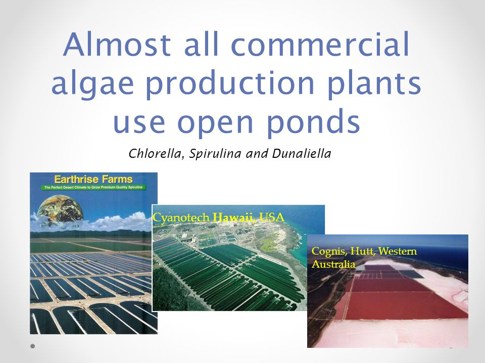 Almost all commercial algae production plants use open ponds