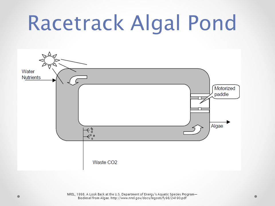 Racetrack Algal Pond
