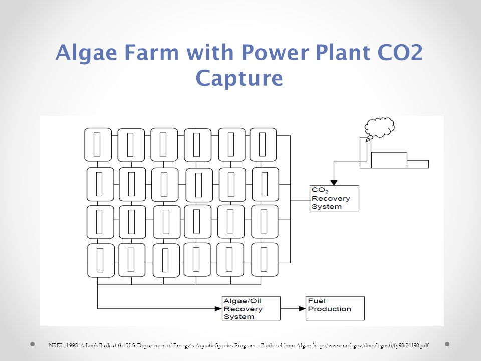 Algae Farm with Power Plant CO2 Capture