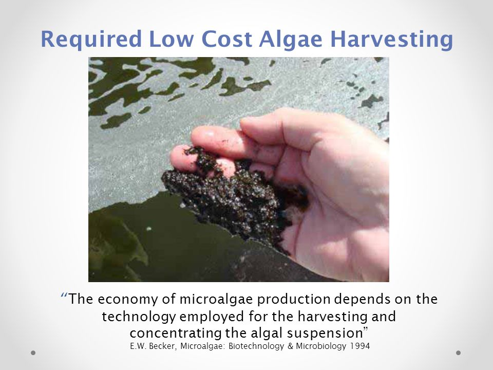 Required Low Cost Algae Harvesting