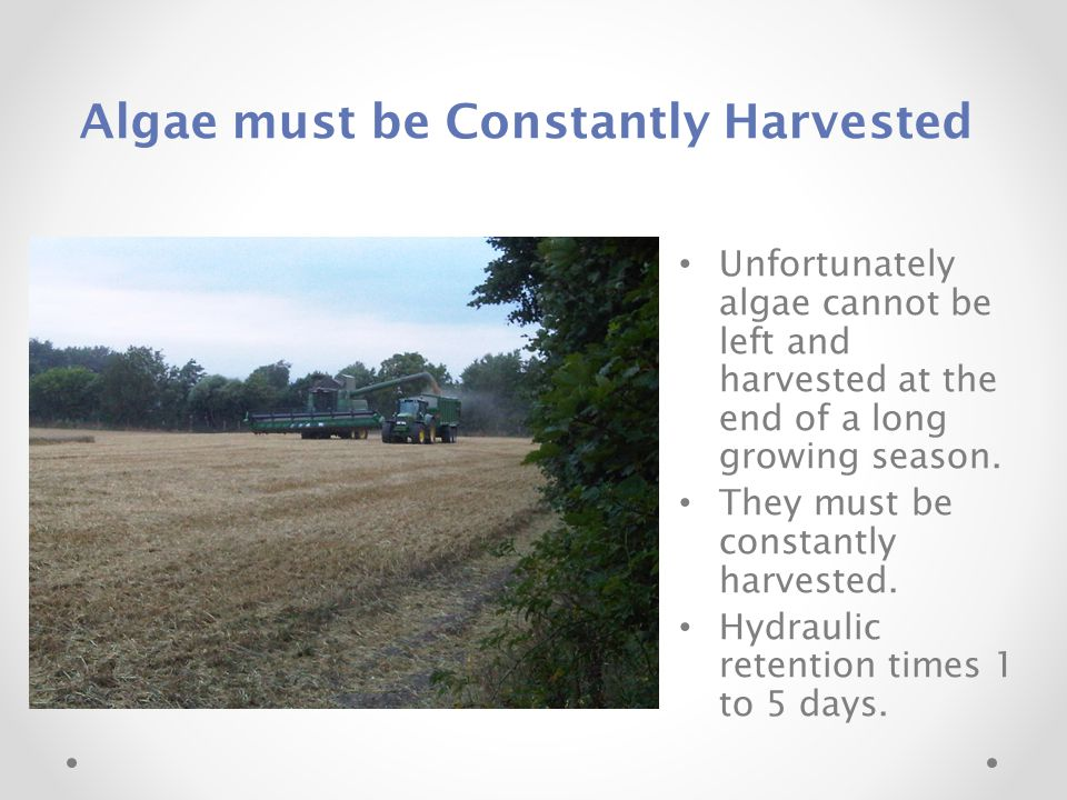 Algae must be Constantly Harvested