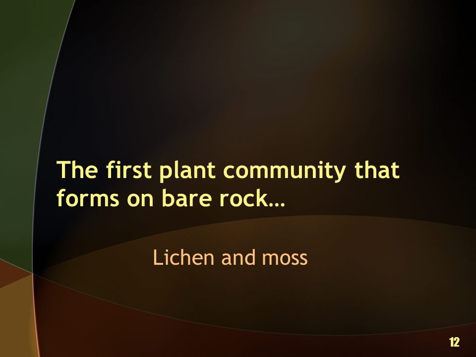 The first plant community that forms on bare rock…