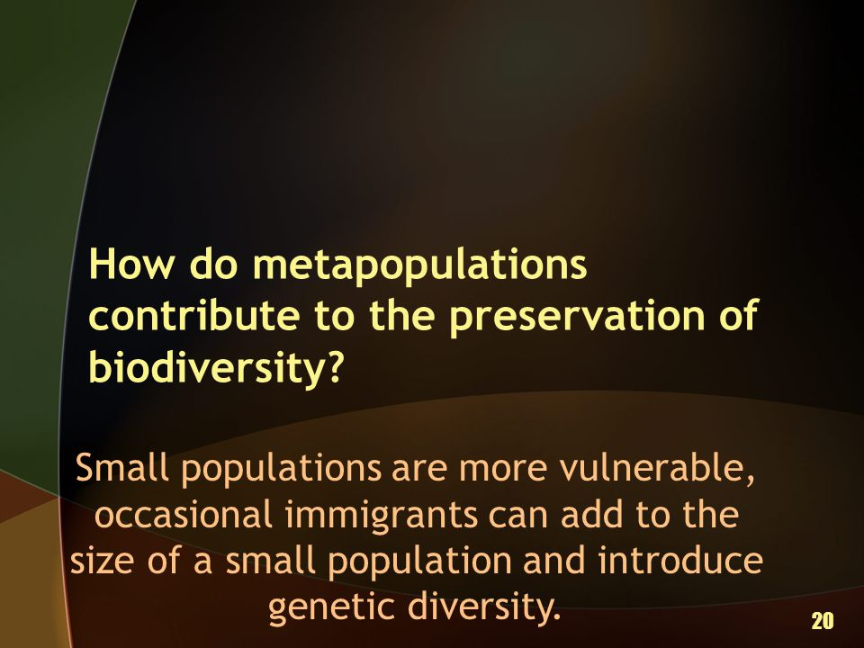 How do metapopulations contribute to the preservation of biodiversity