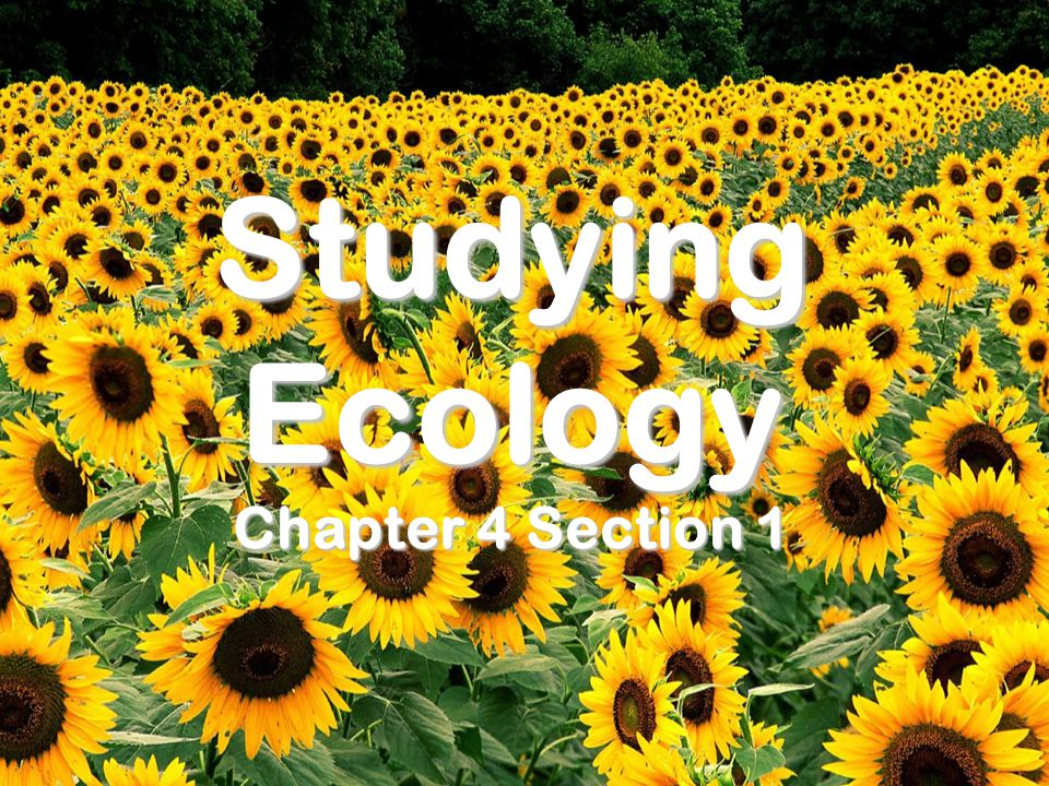 Studying Ecology Chapter 4 Section 1