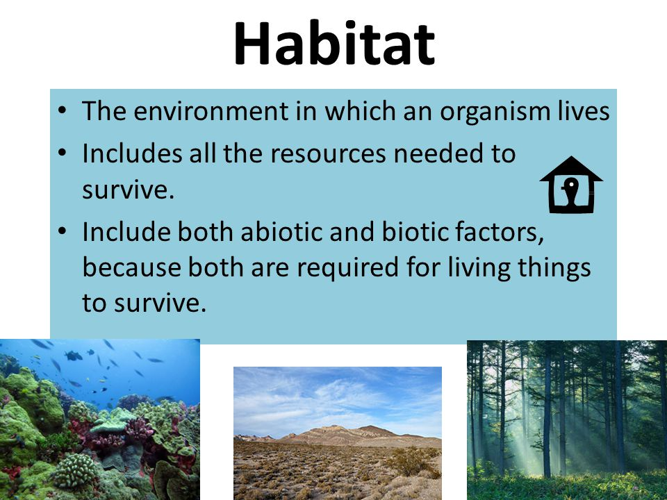Habitat The environment in which an organism lives