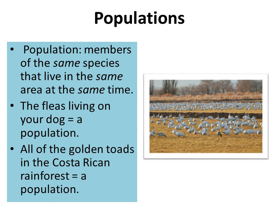 Populations Population: members of the same species that live in the same area at the same time. The fleas living on your dog = a population.