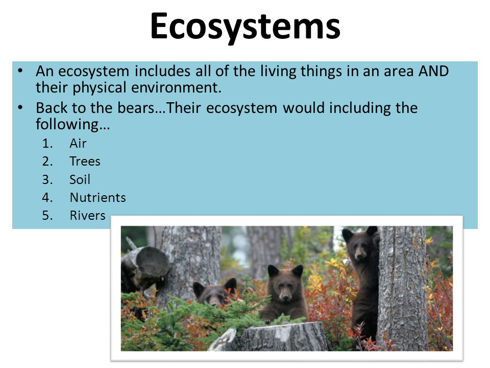 Ecosystems An ecosystem includes all of the living things in an area AND their physical environment.