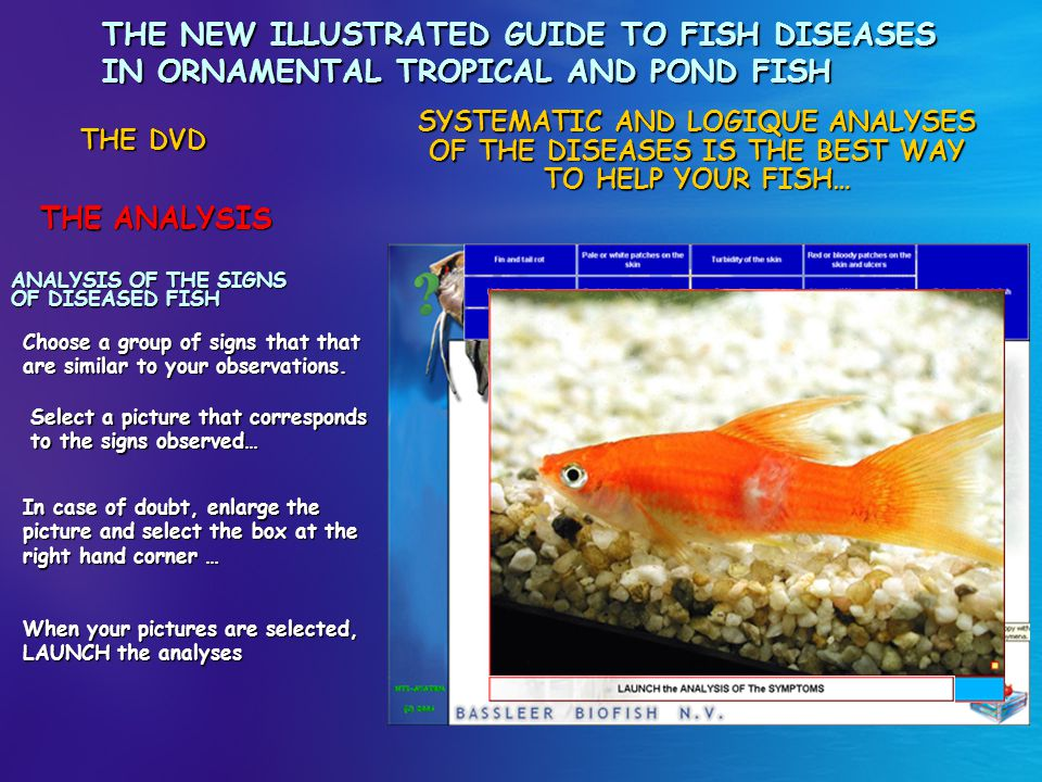 THE NEW ILLUSTRATED GUIDE TO FISH DISEASES IN ORNAMENTAL TROPICAL AND POND FISH
