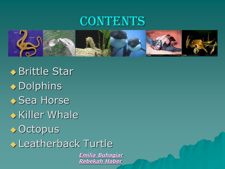 contents Brittle Star Dolphins Sea Horse Killer Whale Octopus