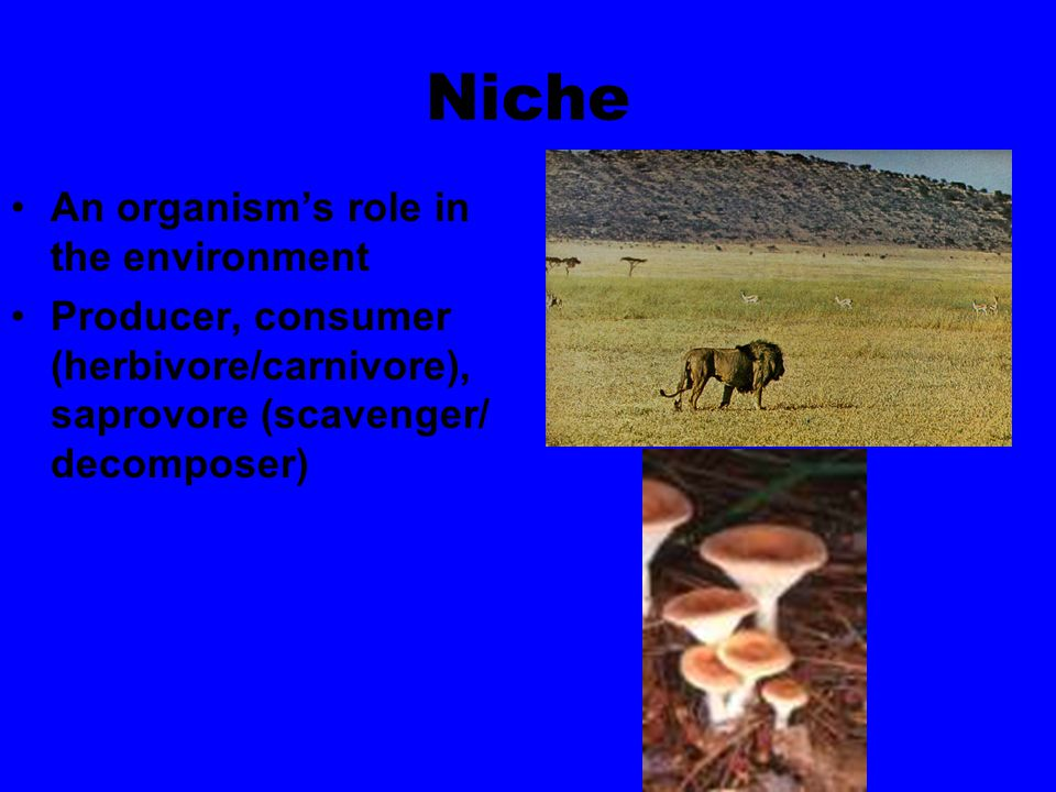 Niche An organism's role in the environment