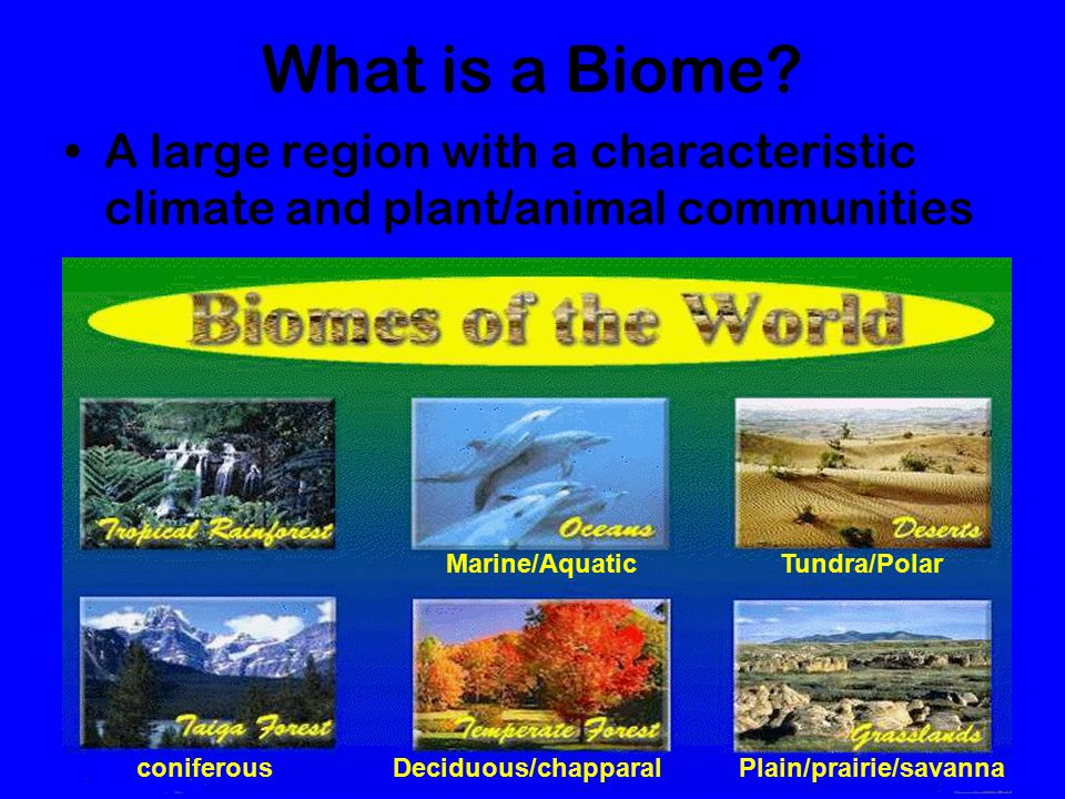What is a Biome A large region with a characteristic climate and plant/animal communities. Marine/Aquatic.