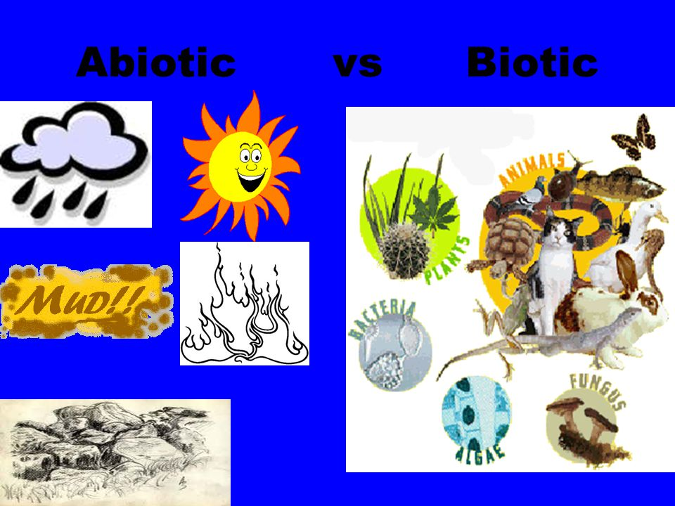 Abiotic vs Biotic