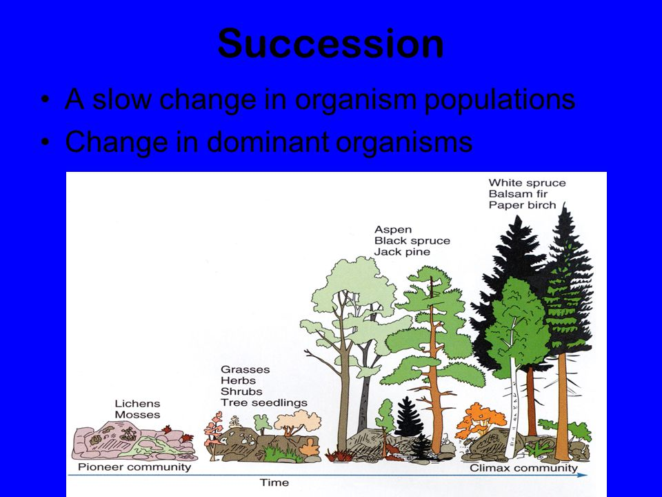 Succession A slow change in organism populations