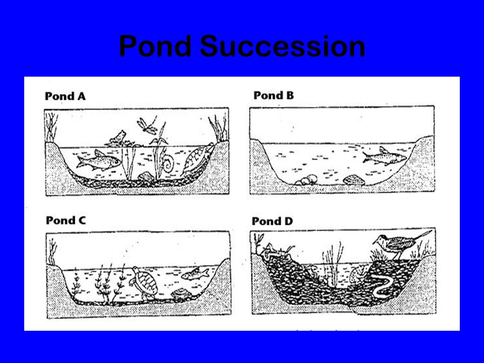 Pond Succession