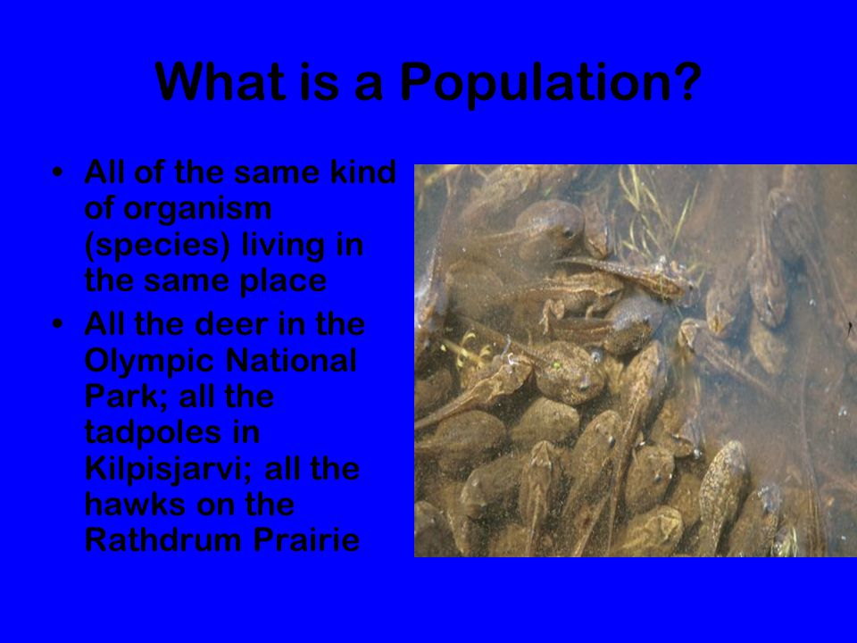 What is a Population All of the same kind of organism (species) living in the same place.