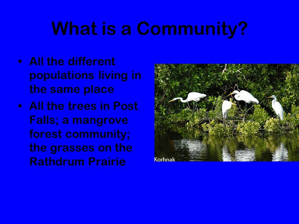 What is a Community All the different populations living in the same place.
