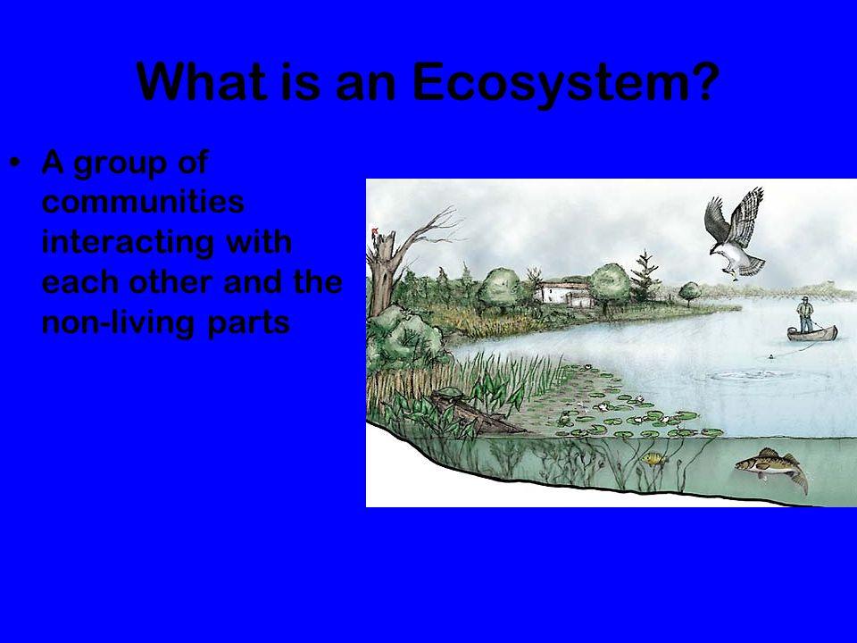 What is an Ecosystem A group of communities interacting with each other and the non-living parts