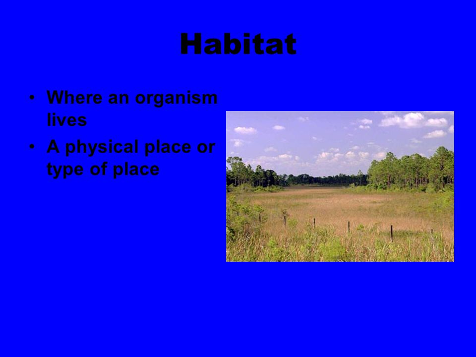 Habitat Where an organism lives A physical place or type of place