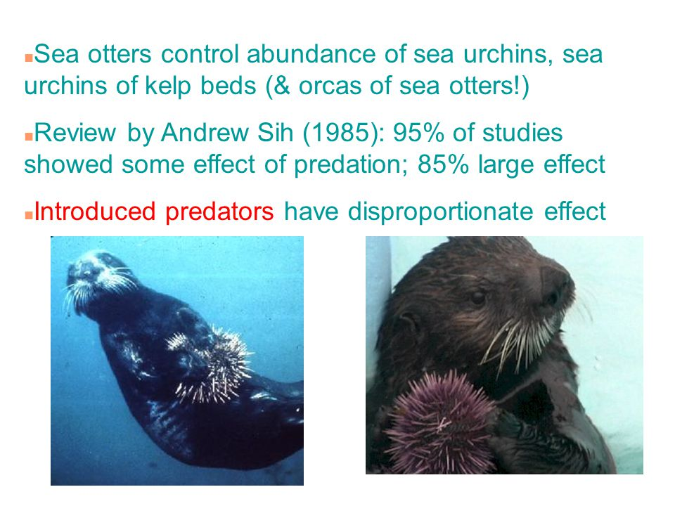 Sea otters control abundance of sea urchins, sea urchins of kelp beds (& orcas of sea otters!)