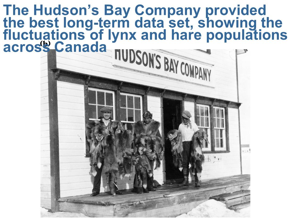 The Hudson's Bay Company provided the best long-term data set, showing the fluctuations of lynx and hare populations across Canada