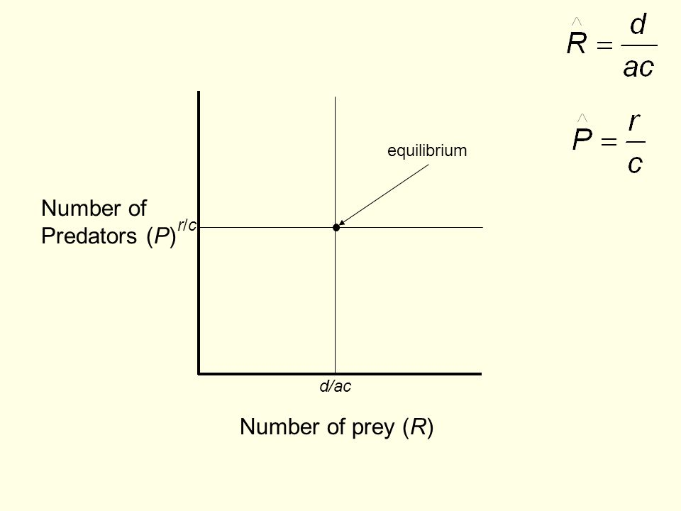 equilibrium Number of Predators (P) r/c d/ac Number of prey (R)