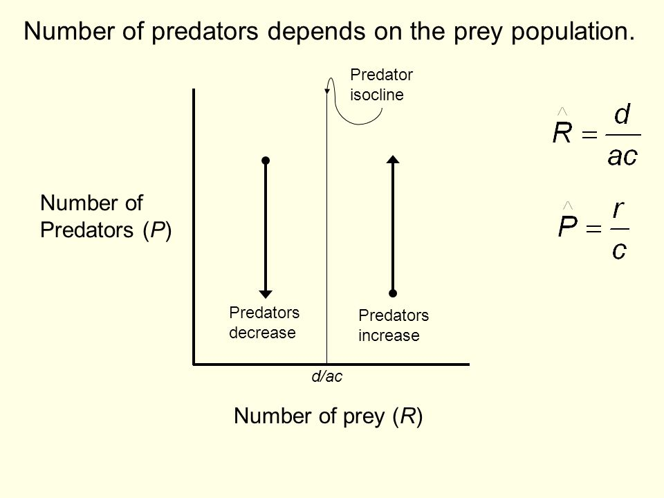 Number of predators depends on the prey population.