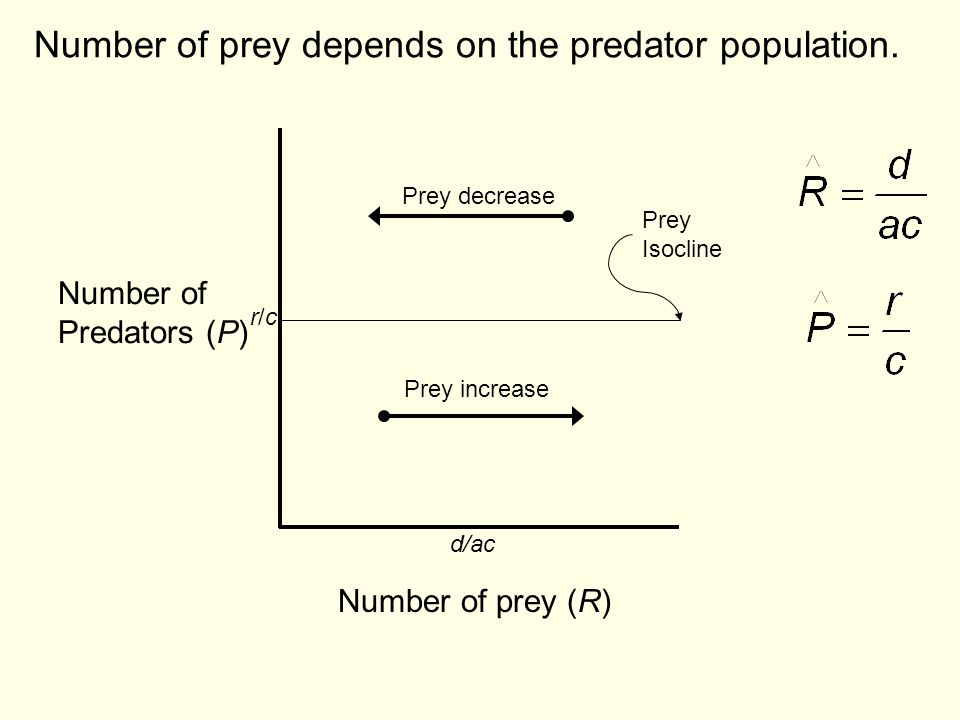 Number of prey depends on the predator population.