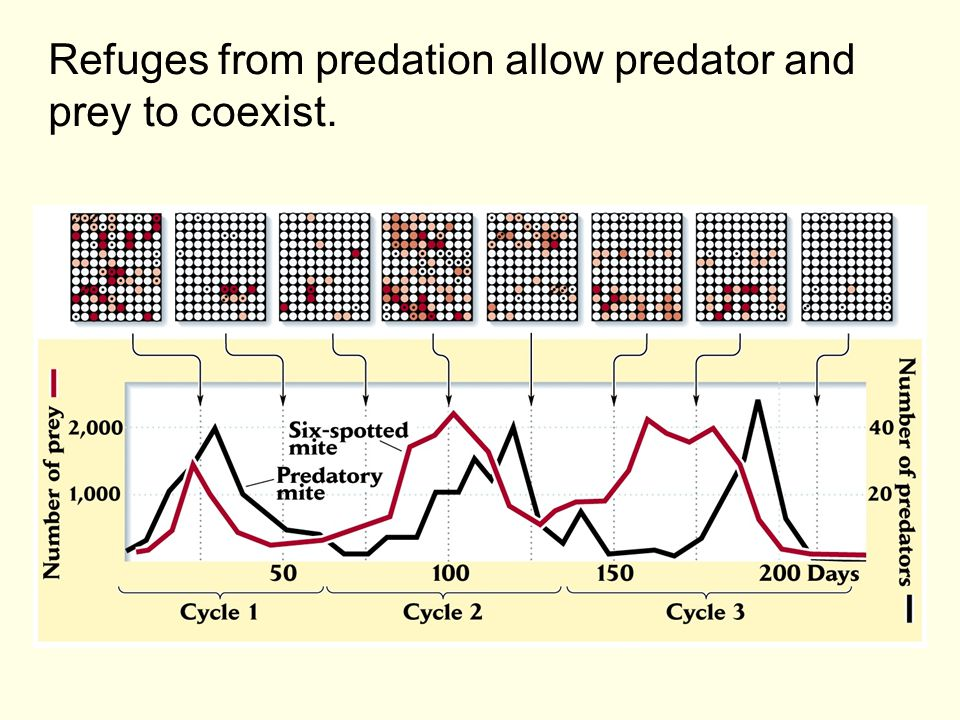 Refuges from predation allow predator and prey to coexist.