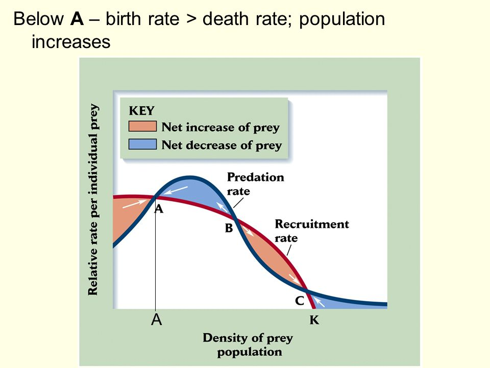Below A – birth rate > death rate; population increases