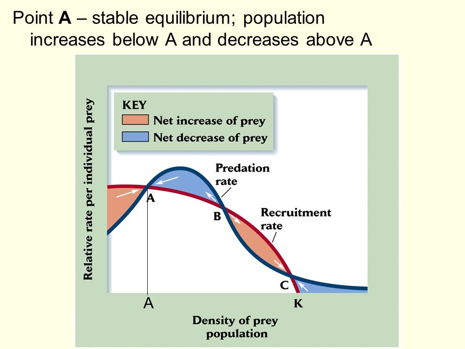 Point A – stable equilibrium; population increases below A and decreases above A