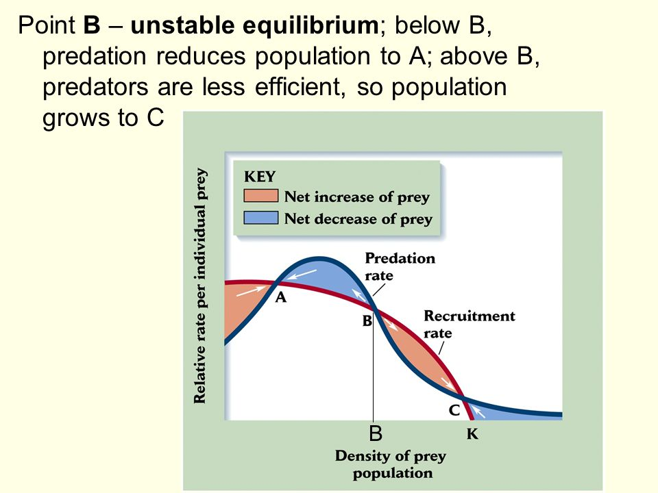 Point B – unstable equilibrium; below B, predation reduces population to A; above B, predators are less efficient, so population grows to C