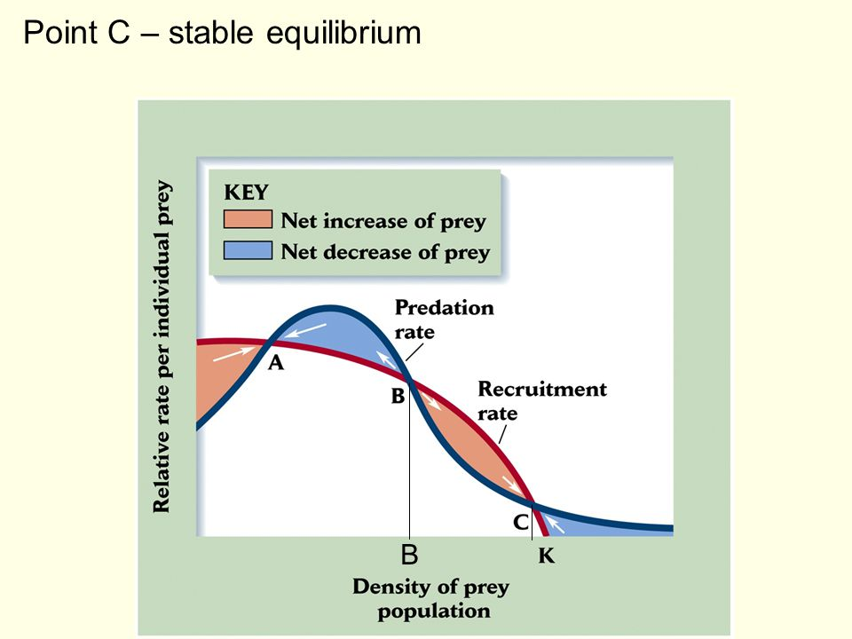 Point C – stable equilibrium
