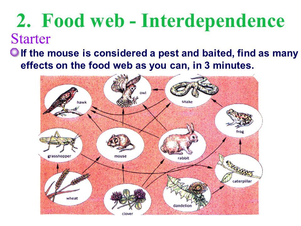 2. Food web - Interdependence