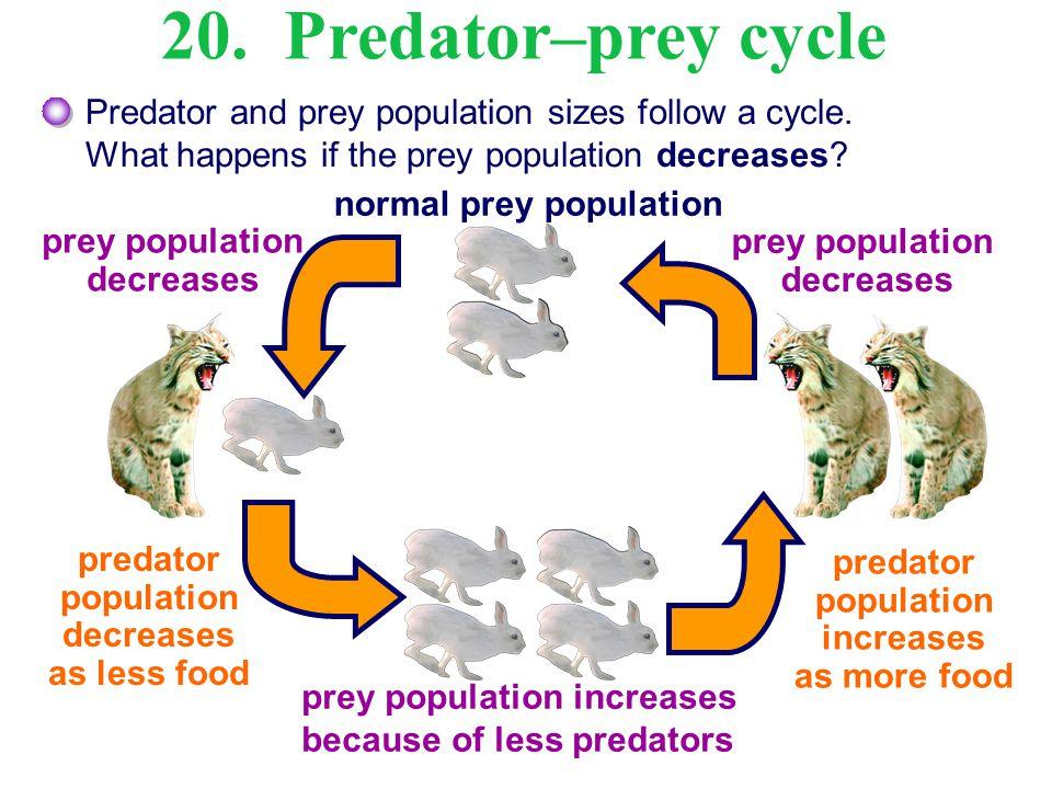 predator population decreases predator population increases