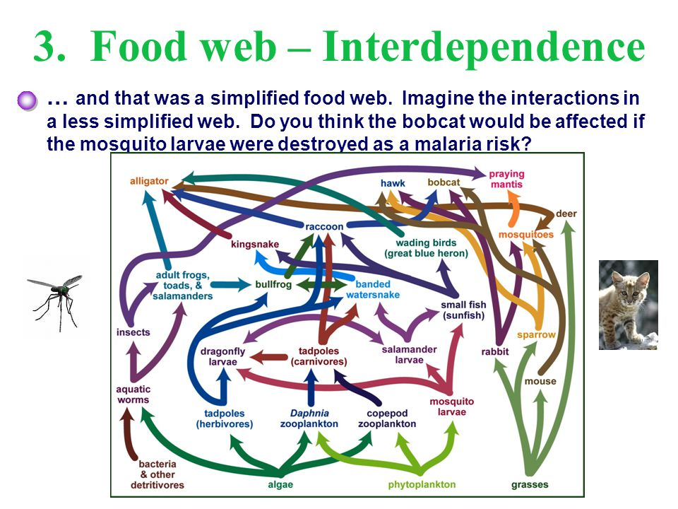 3. Food web – Interdependence
