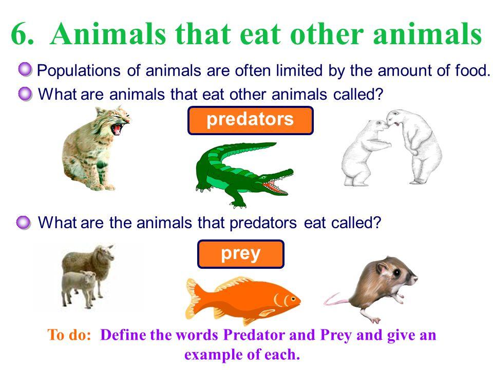 6. Animals that eat other animals